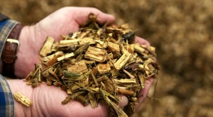 madeira picada biomassa